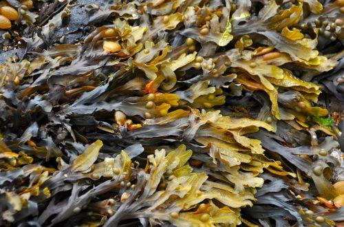 Agricoltura oceanica per battere il riscaldamento delle acque