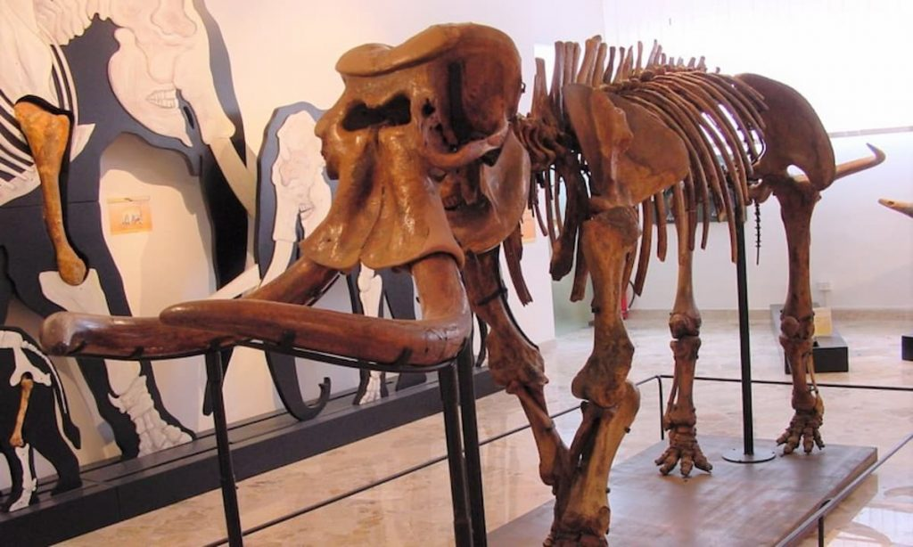 Gli elefanti siciliani si sono ristretti