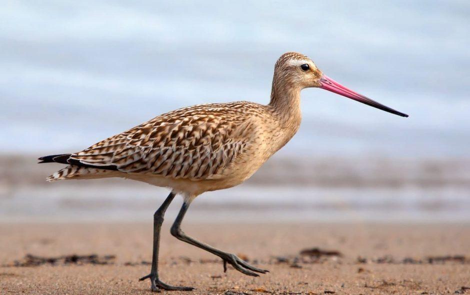Ci sono uccelli che sentono i disastri naturali in anticipo