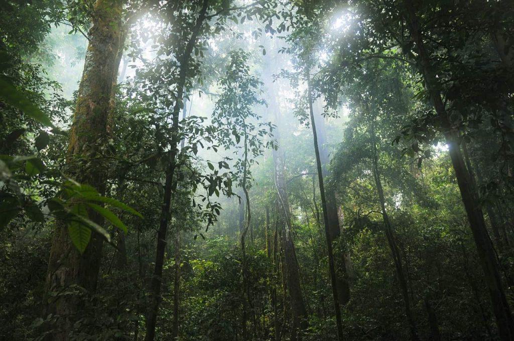 La foresta pluviale di Daintree ritorna ai proprietari
