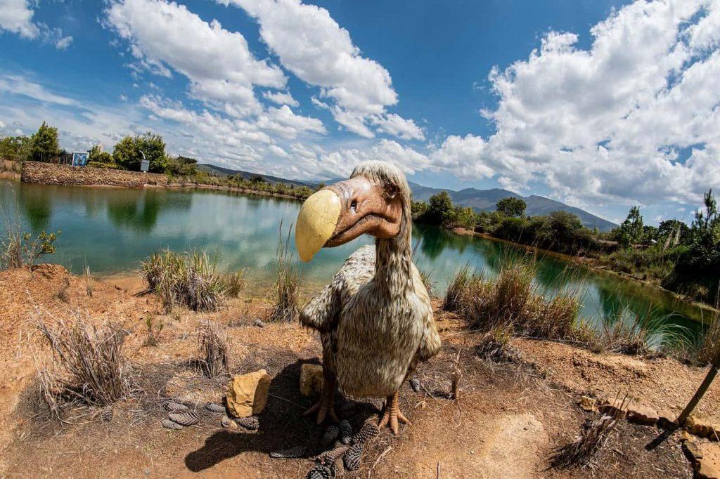 Trovato fossile di uccello gigante europeo